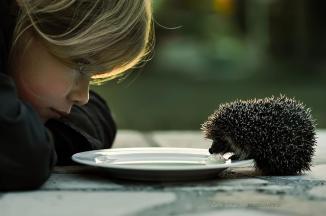 cute-hedgehog